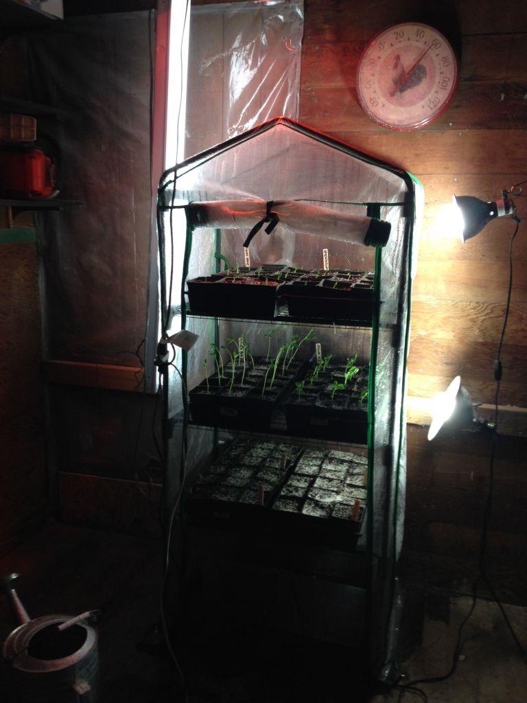 seed setup