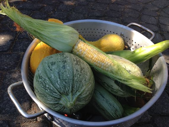 squash corn